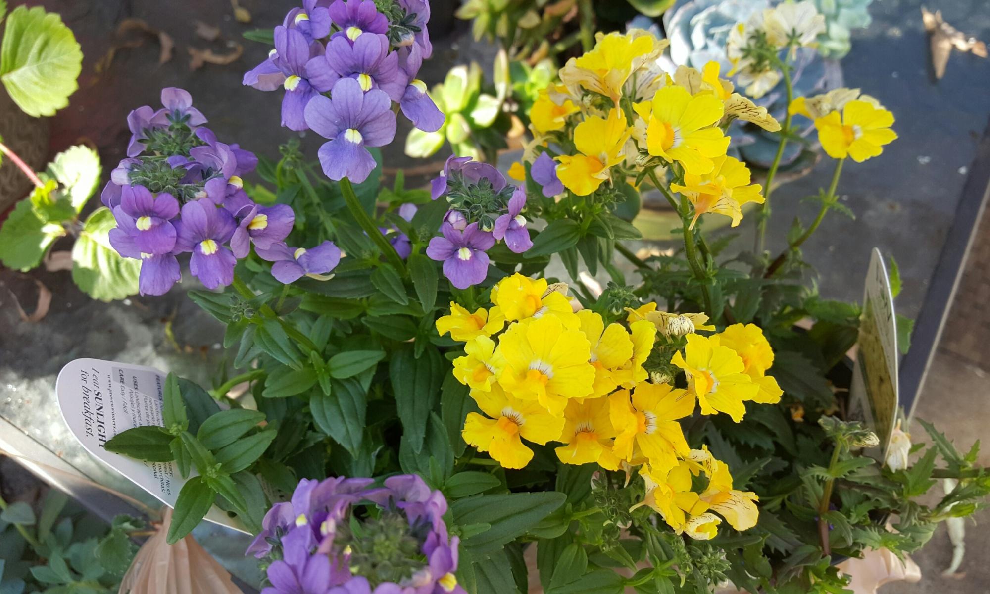 gardening limited