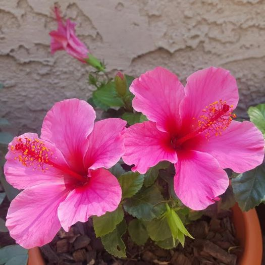 flower and garden pictures
