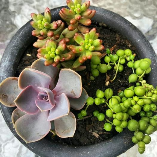 flower and garden photos